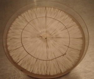 Petri Dishes and Live Cultures